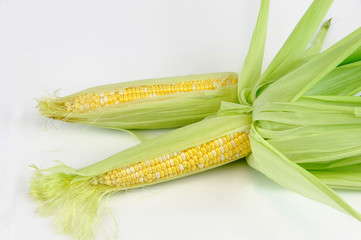 fresh raw corn cob with husk on white background