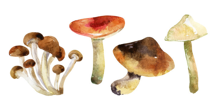 watercolor mushrooms set isolated on white background