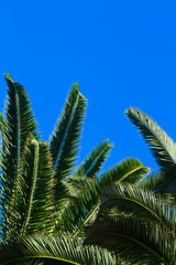 palm tree on blue