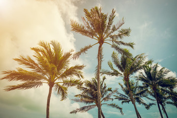 coconut palm tree and blue sky with vintage tone.