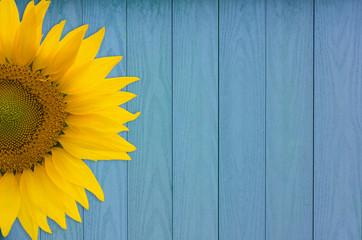 Obraz Sunflower Background - fototapety do salonu