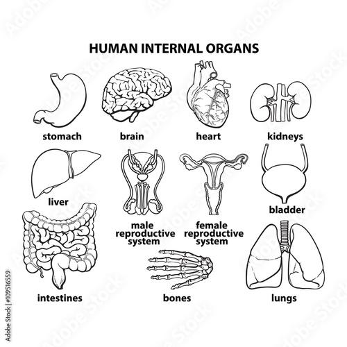 Set of human organs different human entrails black and white set of human organs different human entrails black and white sketch art brain ccuart Images