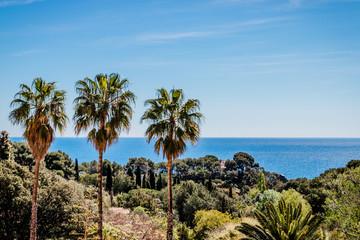 Alignement de palmiers et mer des Baléares