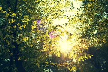 przebłysk słońca przez wiosenne liście w lesie