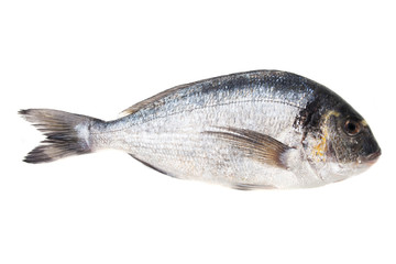 Raw bream fish on white background