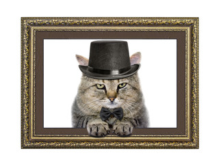 Cat in the hat and bow tie looks out of the picture frame