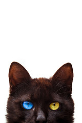 Cat with blue and yellow eye on white background