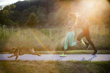 Young couple and dog running in sunlit in park
