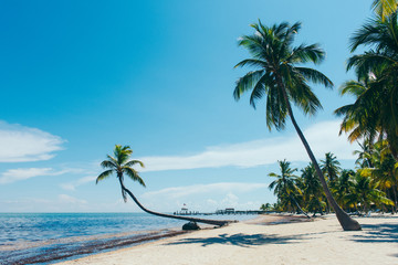 Beach with palm trees, Florida Keys, Florida, USA