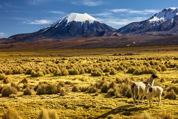 Bolivia - Parinacota