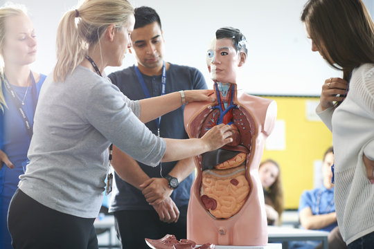 Lecturer speaking to college students in human anatomy class