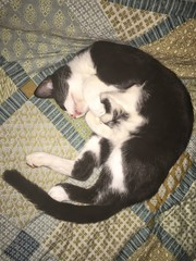 cat curled up sleeping