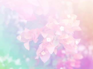 Flower Bougaville background