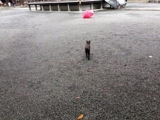 Cat walks towards umbrella