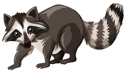 Cute raccoon on white background