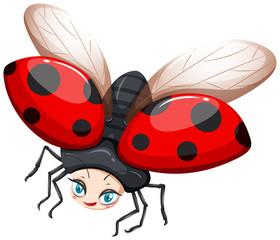 Ladybug flying on white background