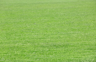 Green grass on football sport field,