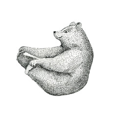 Hand drawn  illustration of fun a bear isolated on vintage backg