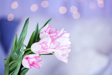 Bouquet of fresh tulips in front of window curtain background