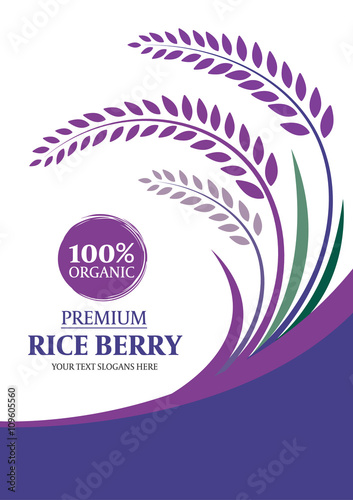 Quot Paddy Rice Berry For Background Layout Template Size A4 Vector Design Quot Stock Image And