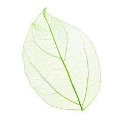 In de dag Decoratief nervenblad Skeleton leaf isolated on white