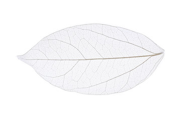 Acrylic Prints Decorative skeleton leaves Skeleton leaf isolated on white