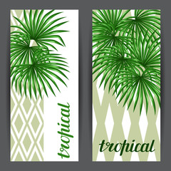 Banners with palms leaves. Decorative image tropical leaf of palm tree Livistona Rotundifolia. Image for holiday invitations, greeting cards, posters, brochures and advertising booklets