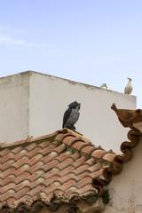Dachverzierung in Lagos, Portugal