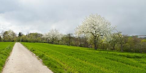 Frühling in Ditzingen