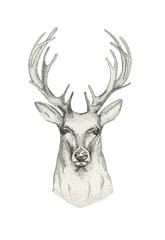 Hand drawn deer head with horns. Drawing  animal sketch black an