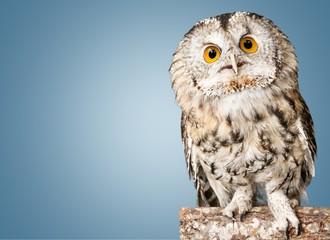 Owl. Wall mural