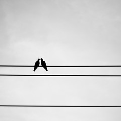 Silhouette pigeon couple feeling love on electric wire