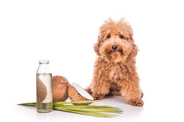 Coconut oil and fats are good and natural ticks and fleas repellent for pets like dogs due to presence of lauric acid.