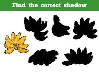 Find the correct shadow, vector set of banana
