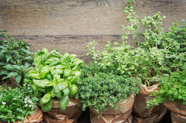 Herbs in plant pots with copy space