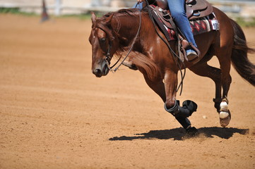 Fragment of the side view of a rider on a horseback during the NRHA competition.