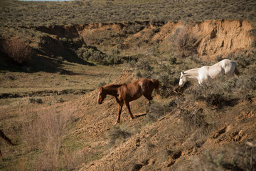 Two horses going down into a ravine