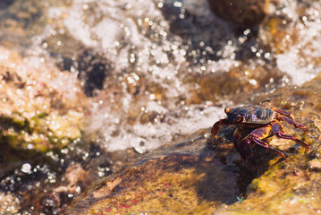 Wet sea crab on the stone on a sunny summer day