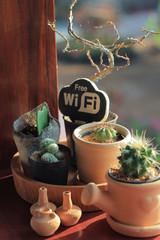 cactus in .earthenware