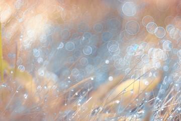 Spring grass blurred background bokeh