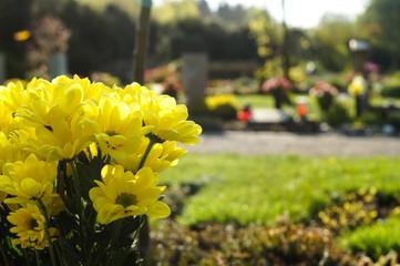 Margeriten auf Friedhof als letzter Gruß
