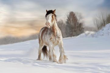 zimowy koń