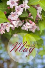 Hello May wallpaper