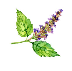 Watercolor summer insulated patchouli