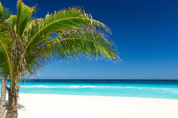 Tropical beach with coconut palm tree and white sand