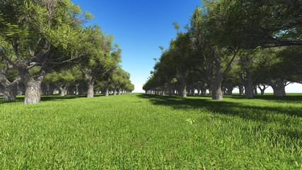 avenue of trees in the park