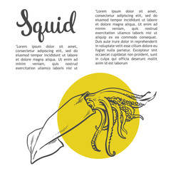 Sketch squid, vector illustration drawn by hand on a white background, isolated squid, sea food concept for the menu, advertising, sales brochures with information inscription lettering Squid
