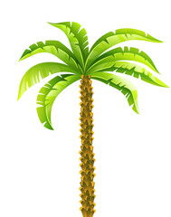 Tropical coconut palm tree with green leaves vector illustration eps10