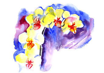 Watercolor yellow summer orchid