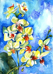 Watercolor yellow summer orchid on blue